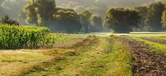 Morgens um halb-zehn in Schmelz........In the morning at 10 AM 30, in Schmelz (thorvonasgard) Tags: morgens streiflicht landschaft bume wiesen felder morning sidelight landscape trees fields meadows
