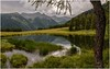 Val di Peio (Eric@focus) Tags: greatphotographers valley pond trees mountains italy trentino diamondclassphotographer flickrdiamond