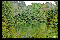 "Bonanza Park #2 ""Duckrace, no Duckface"" (YobeK) Tags: scherpgesteld hogekwaliteit yobek yobekakajohankuhlemeier yobekbringeroflight art artwork achterhoek bonanzapark canon300d photoshop yellow brown green duckrace duck duckface pond"