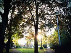 2016-10-22_11-10-22 (txchris86) Tags: stadtpark park citypark day tagsber herbst autumn tree trees baum bume natur nature sunny sunshine sonnig sonnenschein edited plants pflanzen