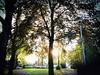 2016-10-22_11-10-22 (txchris86) Tags: stadtpark park citypark day tagsüber herbst autumn tree trees baum bäume natur nature sunny sunshine sonnig sonnenschein edited plants pflanzen
