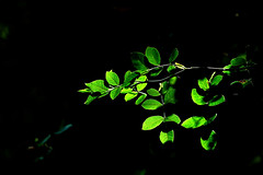 """""""Somebody turned on the light.."""" (Ilargia64 (back again!)) Tags: light bushes leaves green black darkbackground nature forest"""