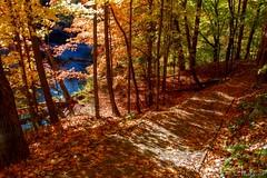 161011-12 L'heure Orange (clamato39) Tags: parcchauveau villedequbec provincedequbec qubec canada autumn automne arbre tree orange