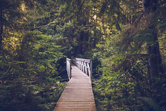 San Josef Trail (Carrie Cole Photography) Tags: bc carriecole park tourism bridge britishcolumbia canada capescott forest natural nature outdoor outdoors pacificnorthwest porthardy portmcneill vancouverisland westcoast