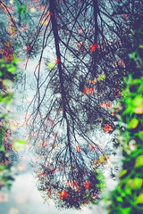 other heaven but not for me (Smo_Q - As long as you remember me, I'll never ..) Tags: autumn mirror pentaxk3ii
