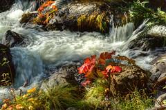 Deer Creek's Fall colors (skawalker) Tags: deercreek hwy32 northerncalifornia fallcolors fall autumn