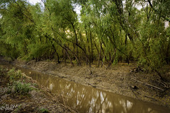 Shady Reflection (JLDMphoto) Tags: nikon d7200 14mm tree canal island shade reflection perrylake delawareriver kylemarsh perrywildlifearea kansas landscape nature