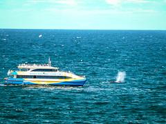 Follow that blow! (JoPMas) Tags: whale humpback sydney watsons bay boat vessel ocean blow cruise water blue