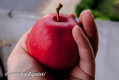 Apfel vom Erntezug - Apple harvest train (Bernsteindrache7) Tags: autumn sony alpha 100 farm fruit frchte red outdoor