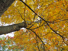 Autumn with the Panasonic 20 (Rick Payette) Tags: m43 autumn omd em10ii 20mm fall foliage