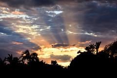 Shining light (Dreaming of the Sea) Tags: nikon d7200 dusk trees twilight sunset tamronsp2470mmf28divcusd palmtrees goldenhour clouds bluesky 500v20f 1000v40f 1500v60f