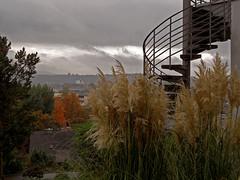 Herbst (onnola) Tags: koblenz rheinlandpfalz deutschland rhinelandpalatinate germany herbst autumn gras grass treppe wendeltreppe stairs pampasgras
