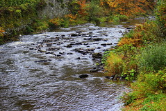 River Rur in Monschau (abrideu) Tags: abrideu canoneos100d river rur water plant nature landscape autumn germany outdoor ngc npc