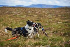28august_Hringur&Venus_lastPlay_127 (Stefán H. Kristinsson) Tags: hringur venus august 2016 play leikur last reykjanes patterson iceland ísland