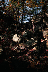 7Q7A6209 (armincreates) Tags: nature fall colors trees lake mountains hike dog puppy beauty trail panorama sunset cows farm wisconsin illinois usa walk