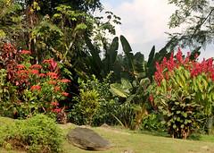 nim li punit (LN Ellen) Tags: redginger nimlipunit belize mayanruins ruins ancient culture caribbean mountains puntagorda wwwwoodenmongoosecom