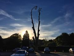 Oak Tree Remains (Marc Sayce) Tags: autumn forest alice holt hampshire wrecclesham farnham surrey south downs national park 2016 lucombe oak tree sunset