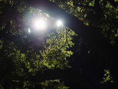 Night Lights (BurlapZack) Tags: olympusomdem5markii olympusmzuiko45mmf18 vscofilm pack01 dentontx nightlights streetlights walkabout night nightlife nighttime darkness light tree branches leaves green summer summertime availablelight flare lensflare glow bokeh dof bugs