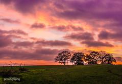 The four (tree)tops (Alex Chilli) Tags: chaldon surrey trees field grass green orange purple sky sunset england vista view landscape