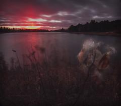 Wind-Whipped Sunset (maryanne.pfitz) Tags: sunset landscape weeds grasses lake reservoir spiritflowage tomahawk wisconsin lincolncounty map9001 maryannepfitzinger