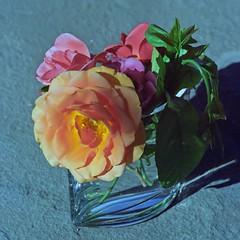 // c'est le bouquet (Riex) Tags: bouquet roses flowers fleurs vase nature cosina cosinon 135mm f28 telephoto m42 screwmount cosinavoigtlander bessaflex tm film analog analogue silverhalide cn200 agfa agfaphoto agfacolor
