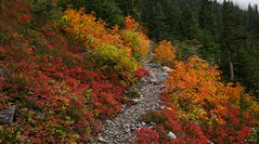 Fall colors along the trail to Easy Pass (keithc1234) Tags: fallcolors hiking trail landscape northcascades easypass