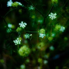 Summer Wildflowers 034 (noahbw) Tags: d5000 dof middleforksavanna nikon abstract blur branches depthoffield dreamlike dreamy flowers landscape marshland natural noahbw prairie square summer wetlands