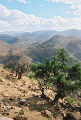 On the road to Tafraoute (louis de champs) Tags: minoltasrt101 mdwrokkor35mm28 film kodak portra160 morocco road r105 tree argan arganier hills mountains tafraoute roadtrip