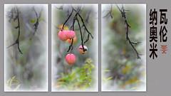 Apple (nyomee wallen) Tags: apple nyomeewalleninchinese
