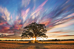 Impressionistic Realism (Matt Molloy) Tags: mattmolloy timelapse photography timestack photostack movement motion sunset colourful sky clouds trails paths wheat field big tree sun greaternapanee ontario canada nature landscape lovelife