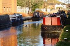 Red doors (dlanor smada) Tags: grandunion canals water narrowboats aylesbury bucks chilterns red