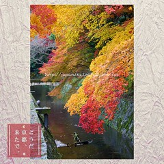 (finalistJPN) Tags: kyoto autumn colors leaves stream walkingpath peacefulpicturesarepriceless ppap pictaro discoverychannel nationalgeographic visitjapan japanguide discoverjapan worldheritage traveljapan
