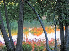Fall Reflections (Cher12861 (Cheryl Kelly on ipernity)) Tags: chicagobotanicgarden glencoeillinois fruitandvegetablegarden water pond reflections color fall autumn trees season landscape