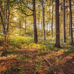 Summer Forest (Sergej Omeltschenko) Tags: colors forest landscape flickr mood landschaft wald hdr schwbischealb swabian bestphoto berghlen besthdr swabianalp sigma24art