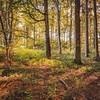 Summer Forest (Sergej Omeltschenko) Tags: colors forest landscape flickr mood landschaft wald hdr schwäbischealb swabian bestphoto berghülen besthdr swabianalp sigma24art