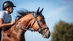 [SAUT D'OBSTACLES] ECHALLENS 29.08.2015-134 (#vmivelaz) Tags: horse sport canon cheval jumping 5d equine equitation canoneos5dmarkiii vincentmivelaz vmivelaz