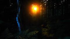 Fire in the Sky (benn.clarke) Tags: uk trees sunset england sunlight forest landscape woods nikon scenery shadows darkness outdoor hampshire brightlight manual sunbeam newforest sunray beautifulearth sunstreak orangeskies orangesun reflectionoflight