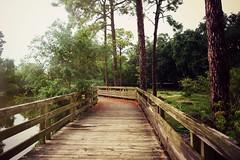 New Orleans 2015 #71 - Audubon Zoo (*Amanda Richards) Tags: bridge trees zoo neworleans pathway audubon audubonzoo 2015