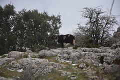 2015-02-07 11.37.30 (Reydelpro) Tags: españa trekking andalucia malaga senderismo torcal antequera 2015 espaa reydelpro