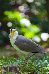 JBP - 02 - 042 (jasonlcs2008) Tags: wild bird nature birds animal animals natural outdoor wildlife jurongbirdpark mothernature birdpark 2015
