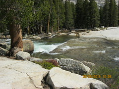 Lyell Fork at the east edge of Tuolumne Meadows Campground - June 2015 - The Slot (water slide) (Bob_ Perry) Tags: yosemite slot tuolumnemeadows tiogapass theslot tuolumneriver lyellfork tiogapassresort inyonational cabinnumber9