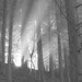 Between the Pines