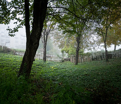 Faded morning (elkarrde) Tags: city morning autumn urban fog digital lumix october cityscape sunday foggy croatia panasonic zagreb 6x7 urbanlandscape twop 2015 m43 mft dugave 67 gx7 location:country=croatia microfourthirds lens:focallength=14mm g1425 g14mmf25 hh014 panasoniclumixg14mmf25 dmcgx7 panasoniclumixdmcgx7 panasonicgx7 camera:model=dmcgx7 location:city=zagreb lens:maxaperture=25 autumn2015 camera:brand=lumix camera:brand=panasonic camera:format=microfourthirds camera:mount=microfourthirds lens:brand=lumix lens:model=g14f25 lens:brand=panasonic lens:format=microfourthirds lens:model=hh014