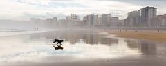 (Antonio Balsera) Tags: espaa gijn asturias perro es playadesanlorenzo principadodeasturias