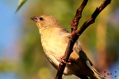 IMG_7414 (Nazeer Mahomed) Tags: nature birds canon 400mm