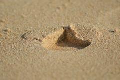 DSC_0202 (saravanni) Tags: sardegna sea sand mare chia spiaggia orme sabbia impronta impronte goldsand orma