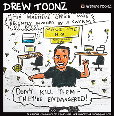 20.17_Drew Toonz Mauitime office invaded by bees (mauitimeweekly) Tags: 2017drewtoonz drewtoonz mauitime office invaded bees bee honeybees honeybee tommyrusso