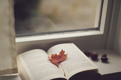 Autumnal reading (Laura Marianne) Tags: book reading autumn leaf chestnuts stilllife window curtain inthewindowsill bokeh dof canon 50mmf14 mood moments calm quiet littlethings janeeyre