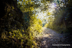Forest path (samuelegiampietro) Tags: forest path pathway italy abruzzo chieti nature october autumn day emotion beautiful