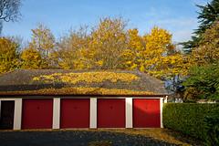 Autumn (JOAO DE BARROS) Tags: barros joo tree botany leaves